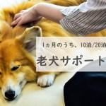 【コロナ禍における新しい老犬との付き合い方】老犬ホーム「THEケネルズ東京」で飼い主の方も安心、わんちゃんも快適に楽しく過ごせる新プランが登場。